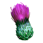 BurgeoningThistle_transparent.png